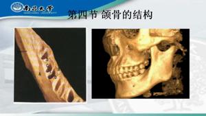 口腔结构第三部分VA0修改