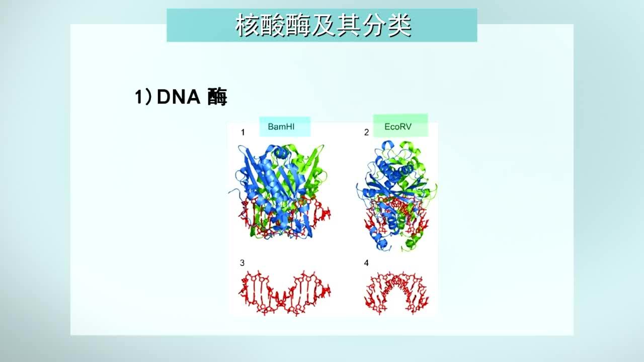 生物化学(一)_苏州大学_智慧树在线课程