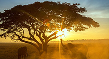 生态文明与人类可持续发展——国情、世情与挑战