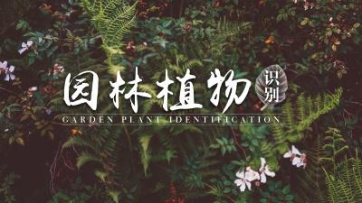 园林植物识别(海南联盟)