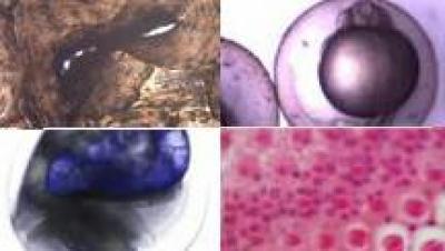 2020水产动物组织胚胎学(山东联盟)答案