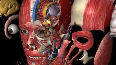 系统解剖学(山东联盟)