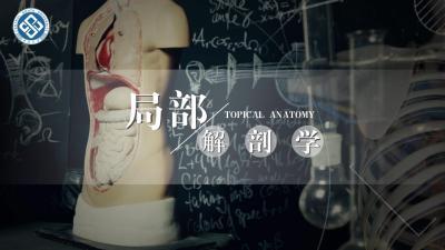 局部解剖学