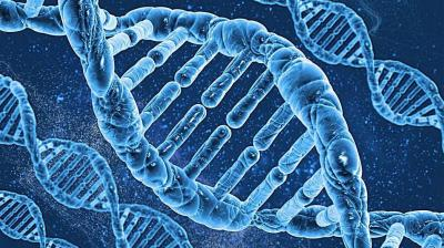 分子生物学(山东联盟)