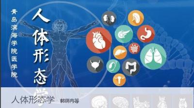 人体形态学(山东联盟)