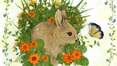 压花艺术——发现植物之美