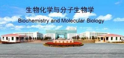 生物化学与分子生物学(山东联盟-济宁医学院)