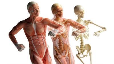 人体运动学(山东联盟)智慧树期末答案
