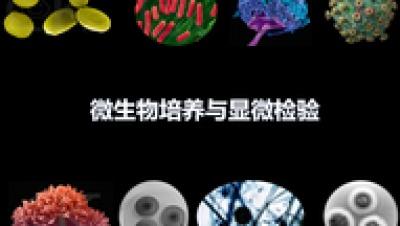 微生物培养与显微检验答案期末答案