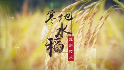寒地水稻栽培技术
