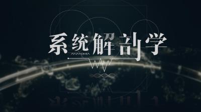 系统解剖学(牡丹江医学院)
