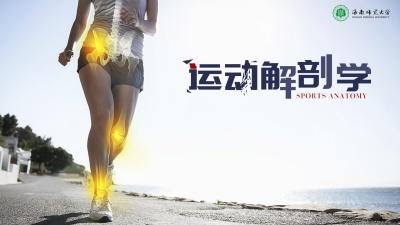 运动解剖学(海南联盟)