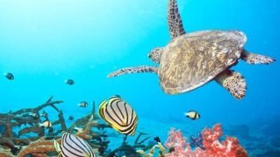 海洋资源总动员期末考试答案2020