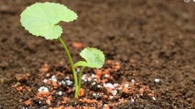 药用植物资源学