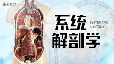 系统解剖学(南方医科大学)
