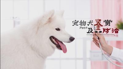宠物犬鉴赏与疾病防治
