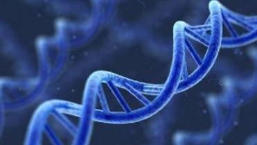 基因工程原理(山东联盟)
