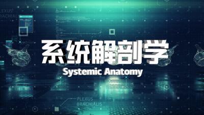 系统解剖学(江汉大学)