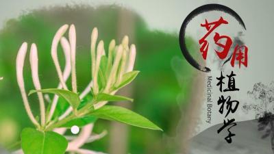 药用植物学(广东药科大学)