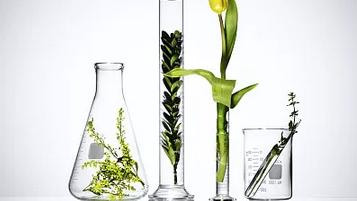 2020植物学(齐鲁师范学院)期末考试答案