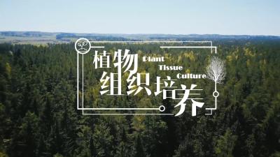 植物组织培养(东北林业大学)