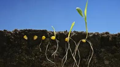 植物生理学(齐鲁师范学院)