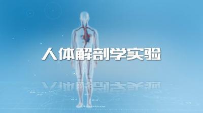人体解剖学实验(山东联盟)