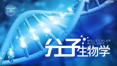 分子生物学(烟台大学)单元测试答案