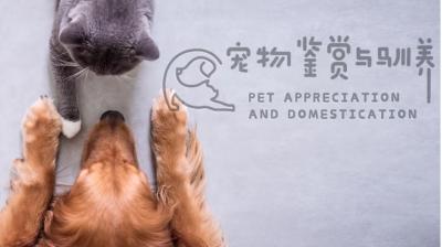 宠物鉴赏与驯养安全答案