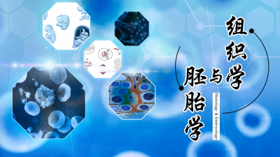组织学与胚胎学(暨南大学)